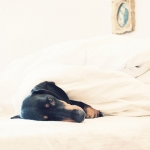 2013-09-stellaharasek-lunathedog-sleepysunday