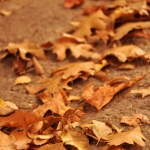 2013-10-stellaharasek-fall-leaves-01