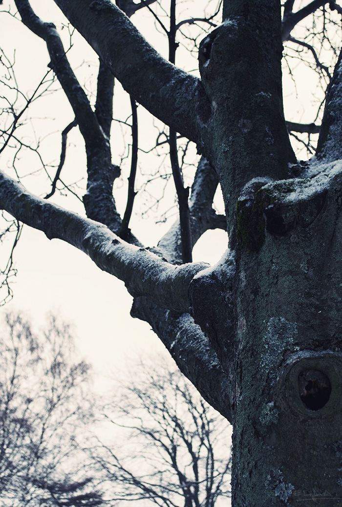 2014-02-stellaharasek-helsinki-merensatamanranta-04