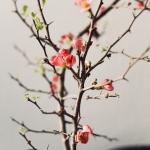 Kirsikankukkia ja epämääräisiä monologeja