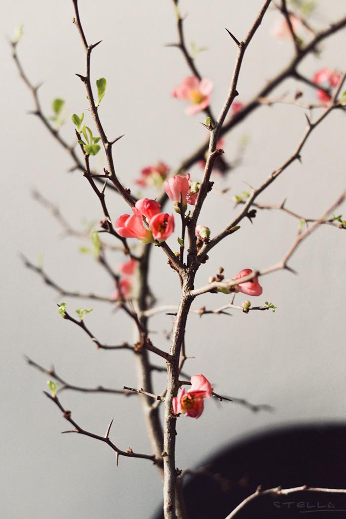 2014-03-14-stellaharasek-cherryblossoms-1