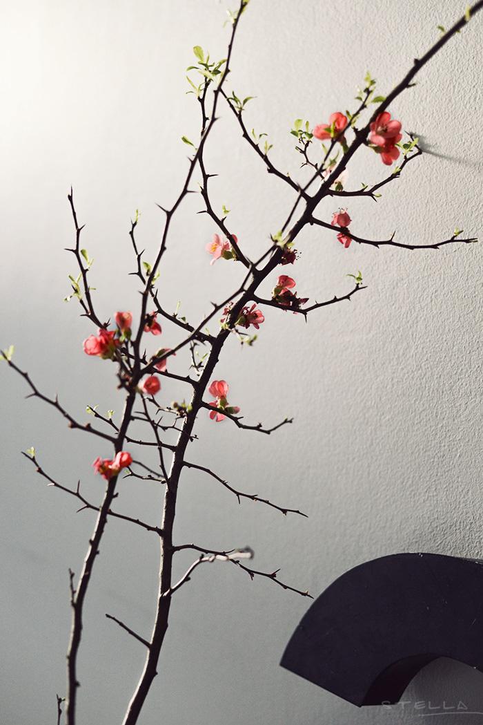 2014-03-14-stellaharasek-cherryblossoms-5
