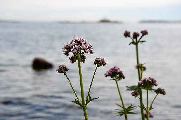 2014-07-01-stellaharasek-archipelago-suvisaaristo-5