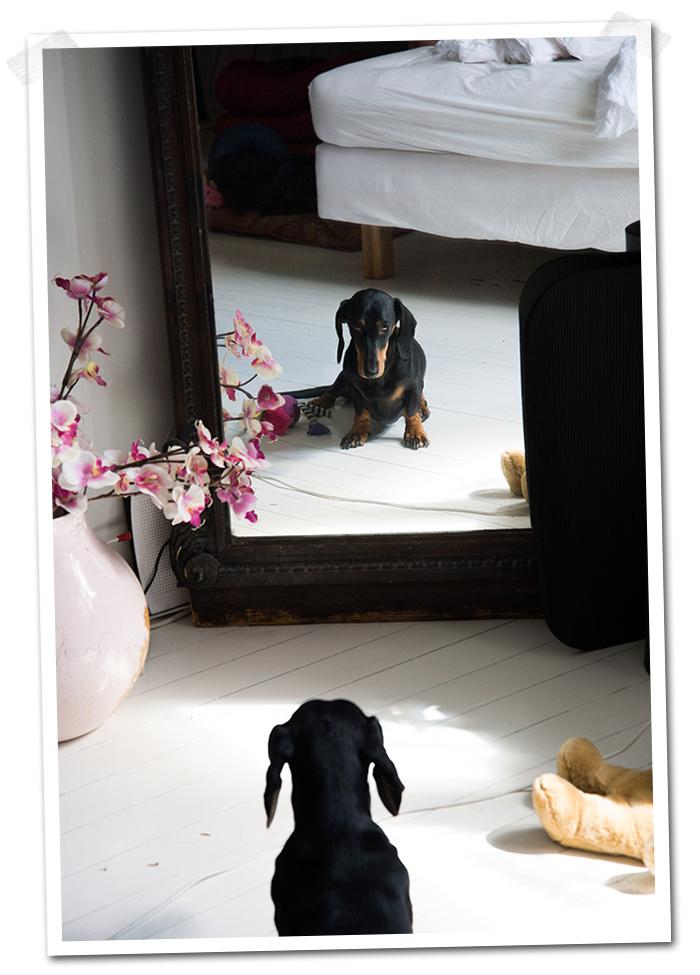 2014-09-30-stellaharasek-lunathedog-thestare-1