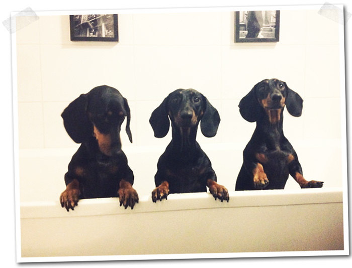 2014-10-13-stellaharasek-dachshund-sisters