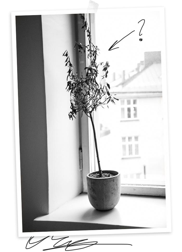 2014-12-10-stellaharasek-olivetree