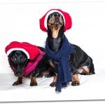 2014-12-24-stellaharasek-xmas-dogs