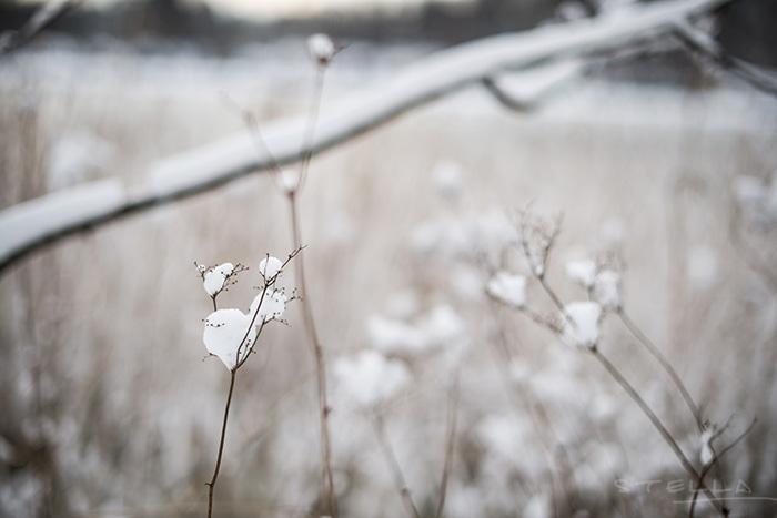 2014-12-28-stellaharasek-whitexmas-8
