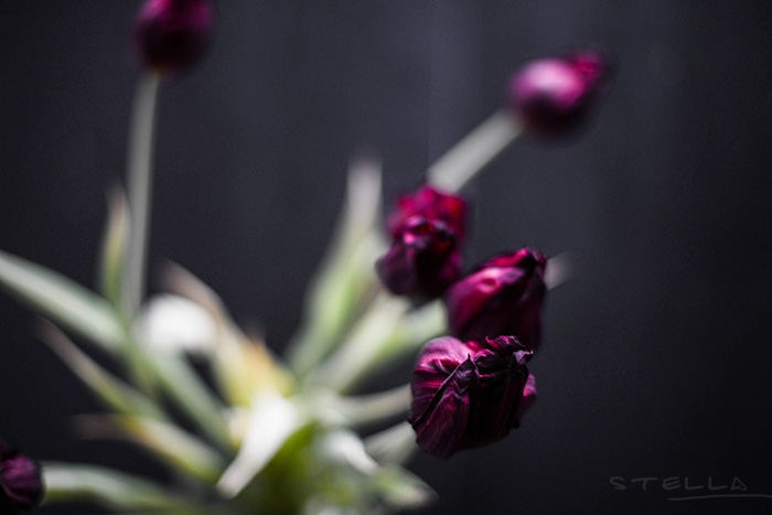 2015-02-16-stellaharasek-flowers-03