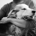2015-03-22-stellaharasek-nellathedog-2