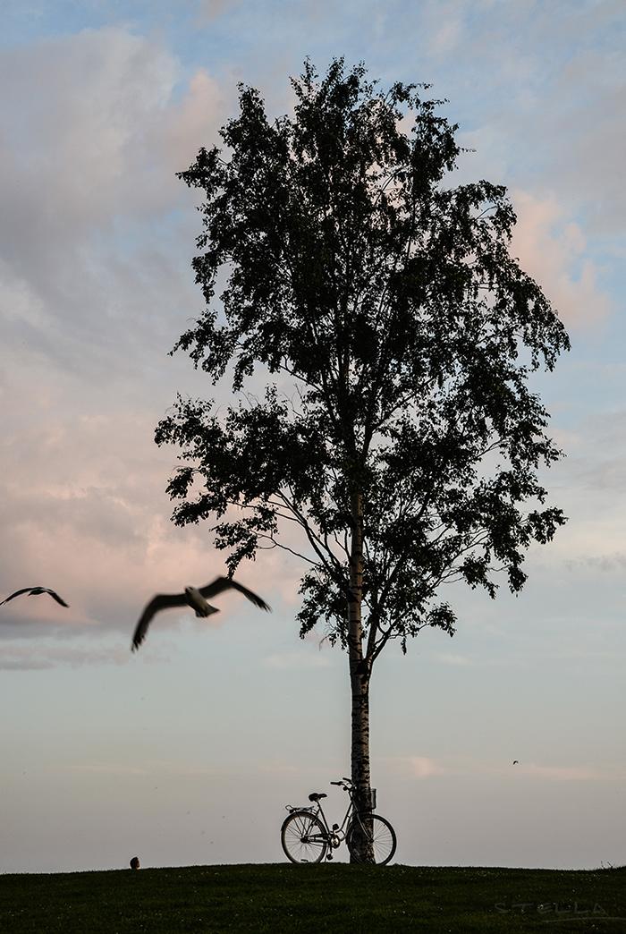 2015-06-25-stellaharasek-eiranranta-3
