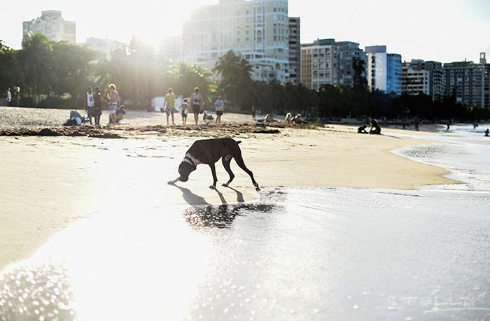 2015-11-26-stellaharasek-puertorico-oceanparkbeach-07