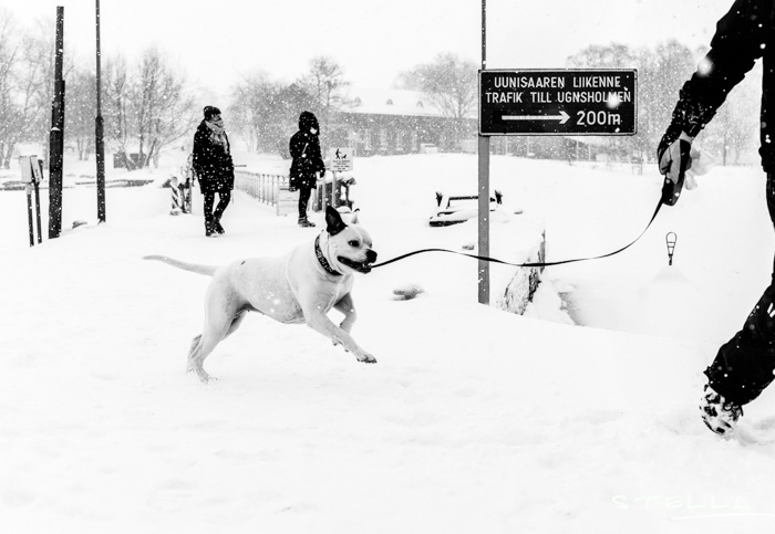 2016-01-22-stellaharasek-helsinki-snow-12
