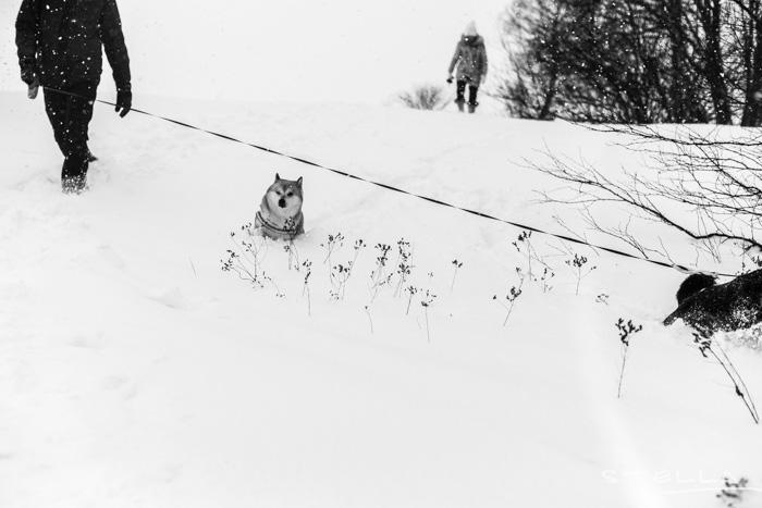 2016-01-22-stellaharasek-helsinki-snow-16