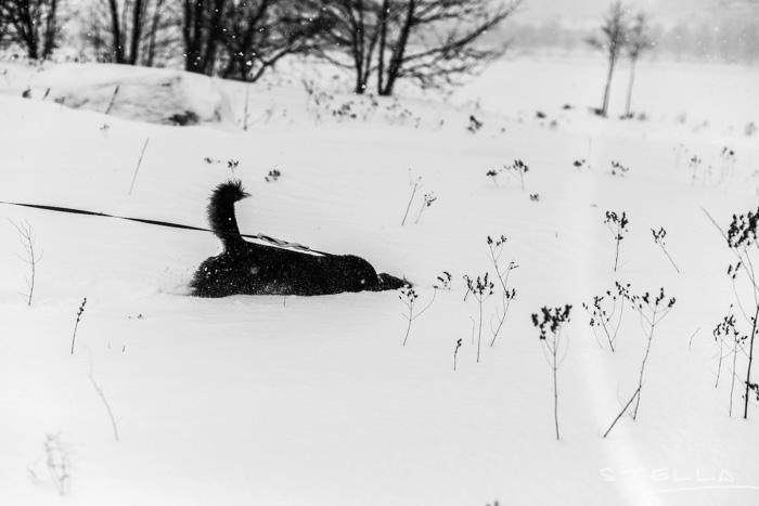 2016-01-22-stellaharasek-helsinki-snow-18