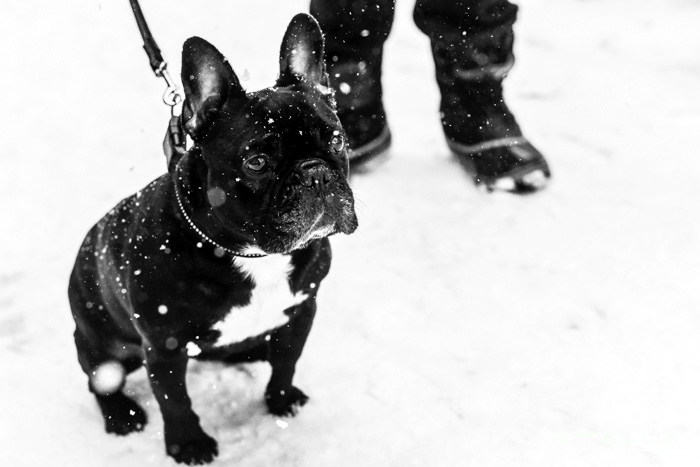 2016-01-22-stellaharasek-helsinki-snow-2