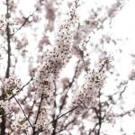 Lontoon kevät