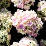 Kukkia ja kärsimysnäytelmä