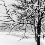 Talviko se siellä kolkuttaa?