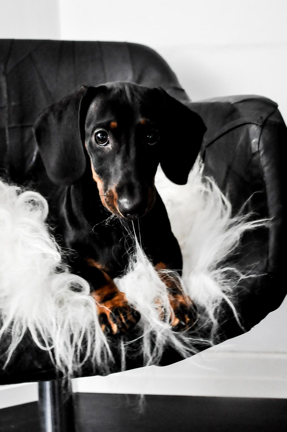 sosiaalinen media asia koiran tyyliin